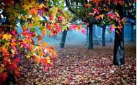 Magic Nature Tree Lovely Fall Beautiful Peaceful Woods Bench Autumn