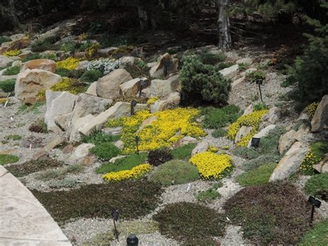 Betty Ford Alpine Gardens by Plants In The Gardens Picture Of Betty Ford Alpine