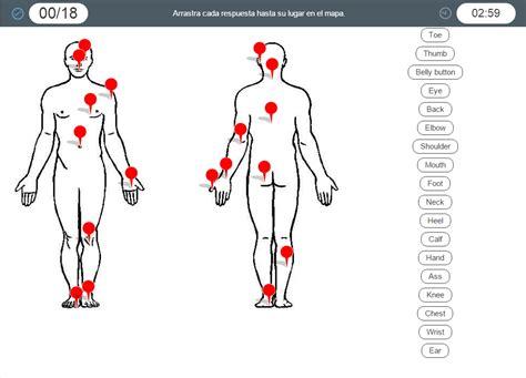 imagenes de cuerpo humano ingles human body parts partes del cuerpo humano en ingl 233 s