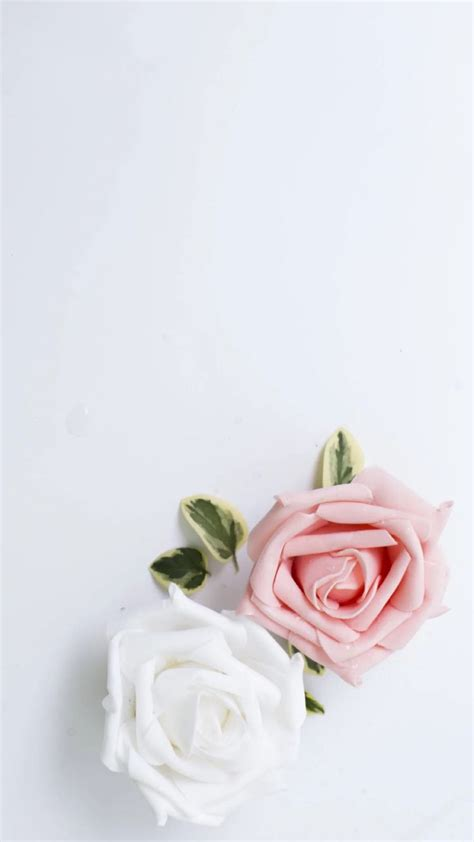 wallpaper cute rose cute backgrounds iphone wallpaperhdc com
