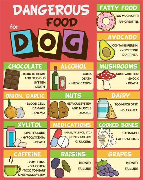 how long should you feed shag feed supplement foods dogs should not eat to ensure a long healthy life
