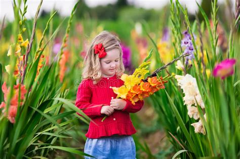 the flower childs play child picking fresh gladiolus flowers stock image image of field flowers 59487285