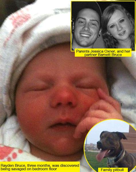kills baby pit bull kills baby rayden bruce mauled by while in home