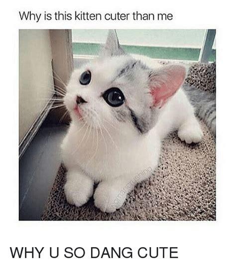 Why U So Meme - why is this kitten cuter than me why u so dang cute cute