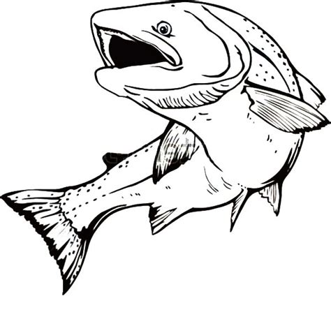 trout fish coloring pages brook trout sketches sketch coloring page