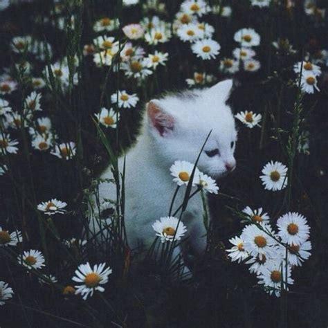 imagenes hipster de rosas tumblr animal aw boho cat cute dark flores flowers gato