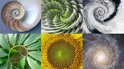 mathematical pattern in nature why i started studying sacred geometry dearing draws