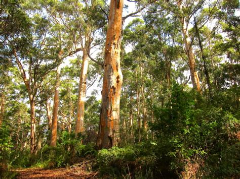 best hiking trips best hiking trips in the south west of western australia