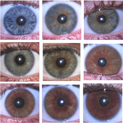 how many eye colors are there eye colour more complex than we thought cosmos