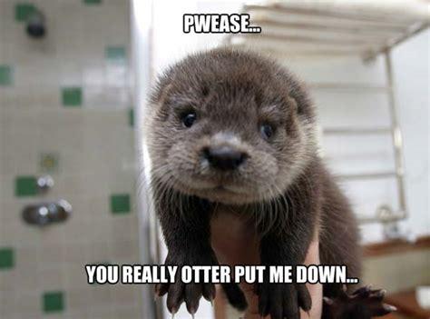 Funny Otter Meme - cute funny otter memes pics bajiroo com