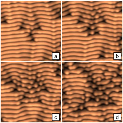 sarcomeric pattern formation by actin cluster coalescence minimization of topological defects in ion induced ripple