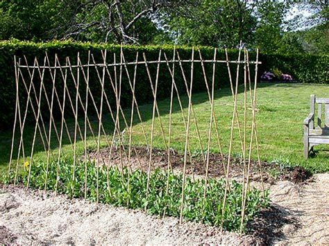 do sugar snap peas need a trellis 35 best images about growing sweet peas beans on