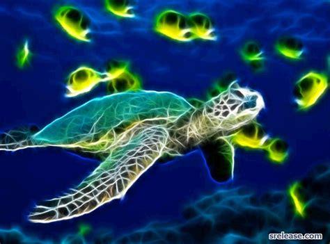 sea turtle live wallpaper free sea turtles wallpapers wallpaper cave