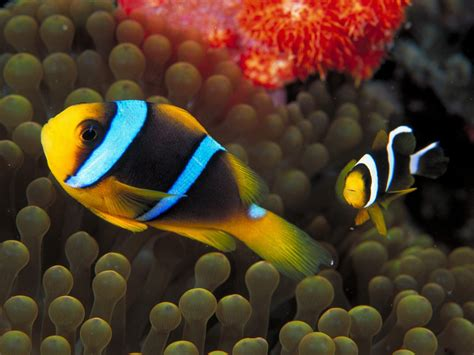 fish for life a jungle life world most beautiful fish wallpaper pictures