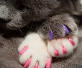 new soft paws design pet radio magazine