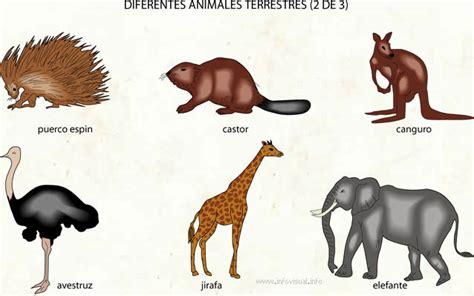 imagenes animales terrestres animales terrestres diversidad de animales