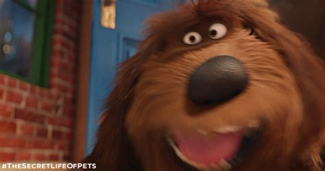 secret gif the secret of pets gifs find on giphy