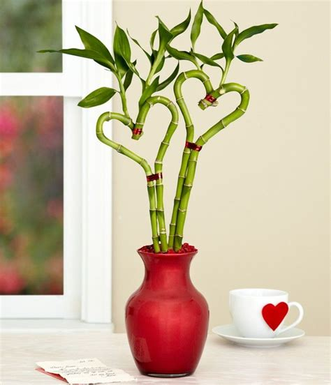 heart shape bamboo plant plantslive buy plants