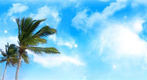 palm trees background palm tree backgrounds wallpaper cave