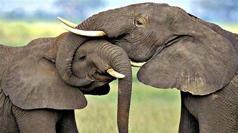 imagenes libres animales hermosos salvajes y en libertad im 225 genes taringa