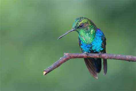 colors of hummingbirds wildlife