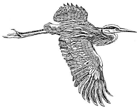 file great blue heron in flight line art drawing