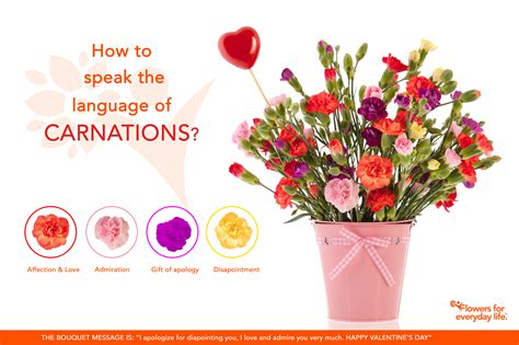 carnations for s day learn their secret