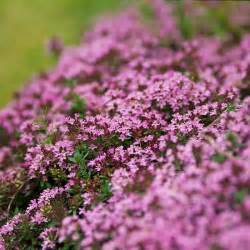 easy groundcovers for your garden