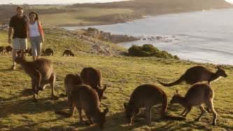 Car Hire Adelaide And Kangaroo Island Kangaroo Island Amazetour