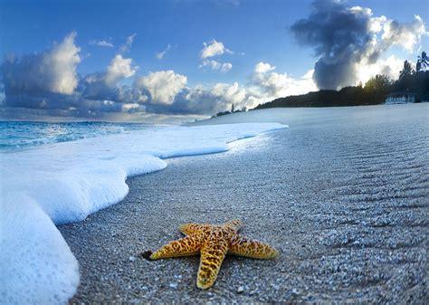 Ocean Curtains Blue Foam Starfish Photograph By Sean Davey