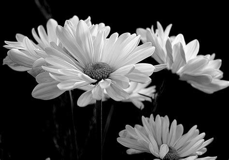 picture nature flower flora macro monochrome