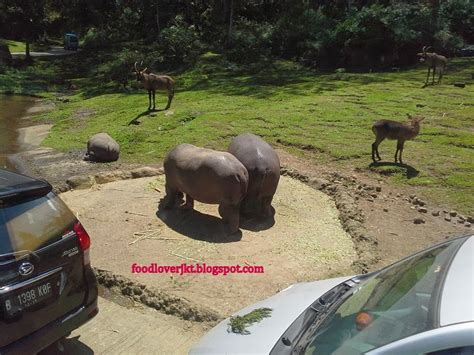 Sho Kuda Di Bogor my my adventure one day trip taman safari bogor