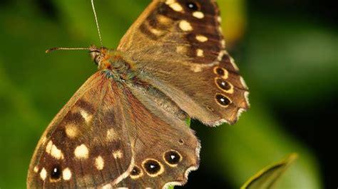 casa farfalle montegrotto la casa delle farfalle di montegrotto albumviaggi