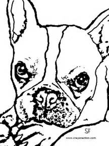 Boston terriers colouring pages