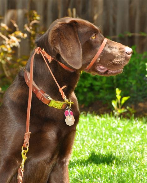 halter for dogs pace halter stops pulling instantly