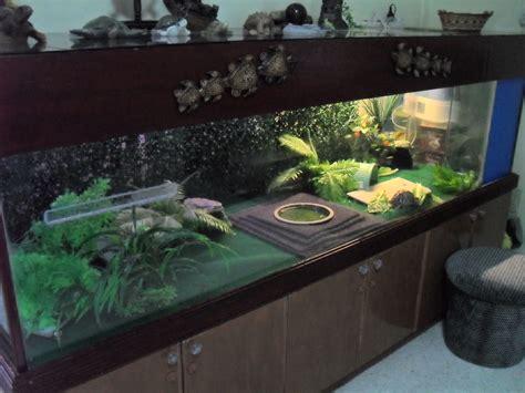 large indoor tortoise habitat tortoise habitat
