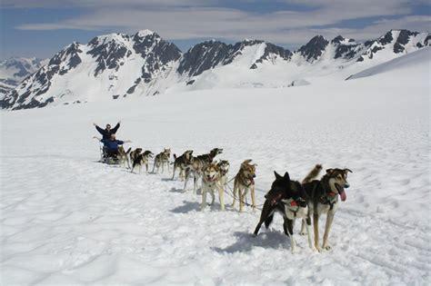 alaskan sled dogs glacier sledding
