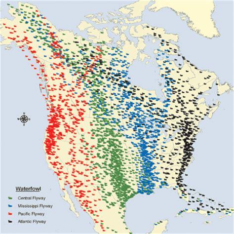 waterfowl migration map general flyways info flyways us