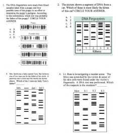 solved dna fingerprinting homework worksheet name