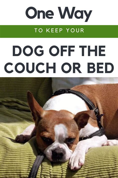 how to keep bed and dogs furniture on modern