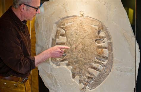 Fossil 4994 Original fossilfund in oberfranken 150 millionen jahre alte