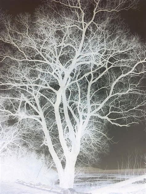 white tree by subwolfsphere on deviantart