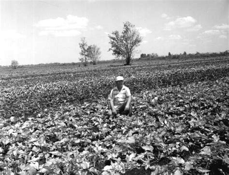 Highlands County Fl Court Records Florida Memory L L Stands In Field Of Caladiums Highlands County Florida