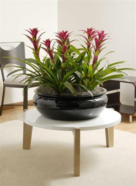 bromeliads   beautiful fiberglass planter