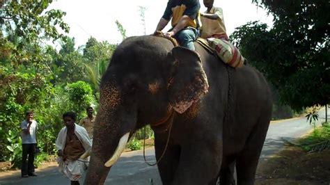 Indian Elephant Ride - YouTube