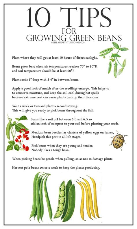 10 Tips On Growing Great Plants This Summer by Best 25 Growing Beans Ideas On Growing Green
