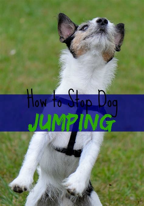 how to to stop jumping how to stop jumping dogvills