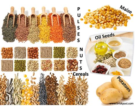 carbohydrates 3 foods 3 forms of carbohydrate rich food the sources of