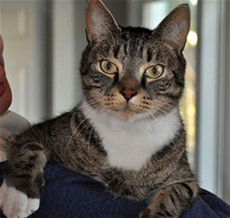 feline leukemia virus  cats