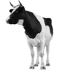 imagenes con movimiento vacas vacas im 225 genes animadas gifs y animaciones 161 100 gratis